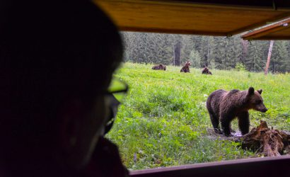 Brown bears coming really close to our obserbatory