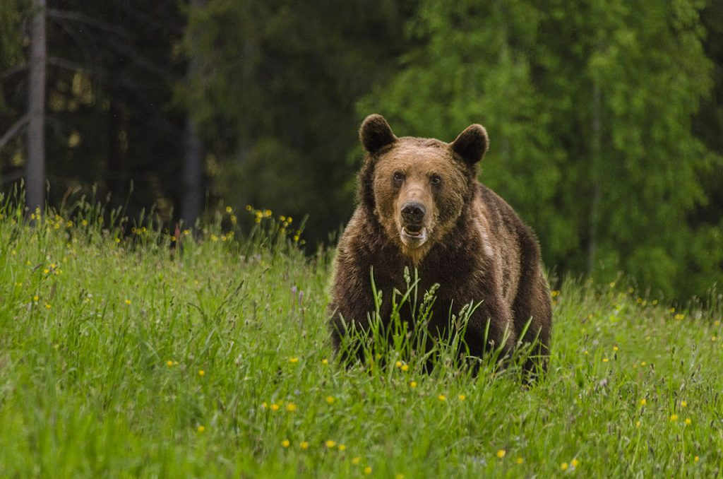 Can I travel to Romania - bear watching tour in May